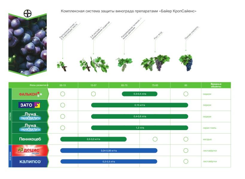 Схема обработки винограда от виктора гречко